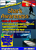 shark awareness